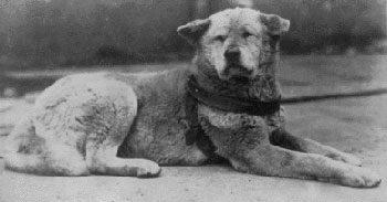 Foto del cane